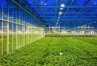 green house farming led